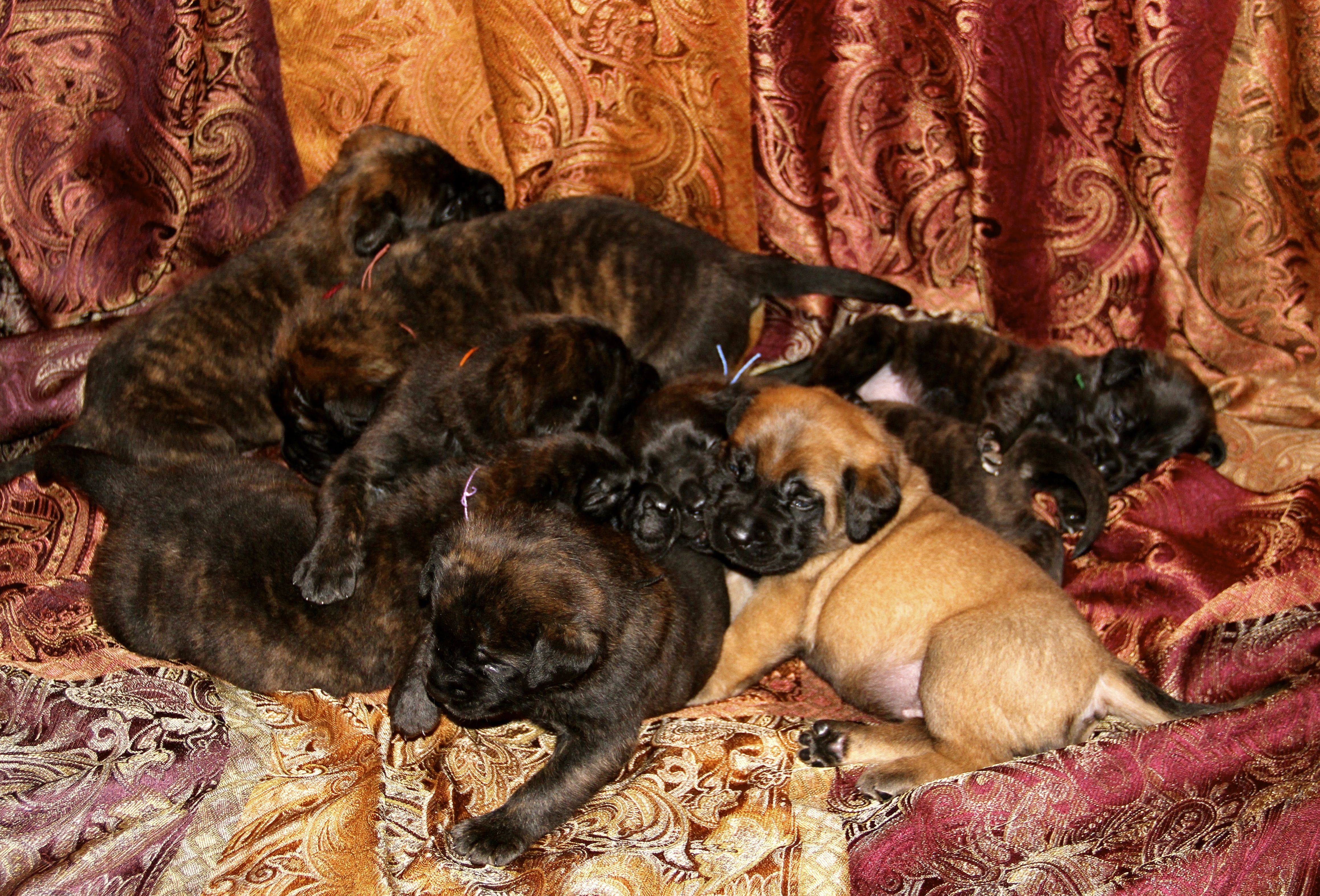 pups3weeks.jpg